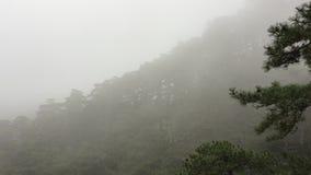 Fianco di una montagna con la foresta coperta dal bello paesaggio della natura della nebbia densa stock footage