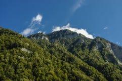 Fianco di una montagna coperto di alberi Fotografia Stock Libera da Diritti
