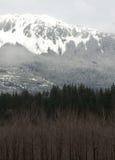 Fianco di una montagna di Treeline Fotografia Stock