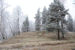Fianco di una montagna invernale Fotografie Stock Libere da Diritti