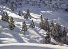 Fianco di una montagna nell'inverno Abete rosso innevato Immagini Stock