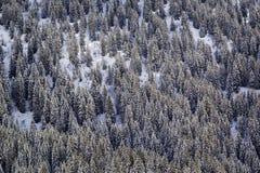 Fianco di una montagna nell'inverno Abete rosso innevato Immagine Stock
