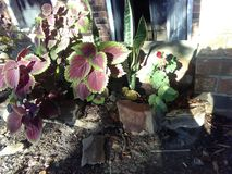 Fiascos florais Fotos de Stock