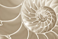 Fibbonachi Spiral in Nautilus Shell. Macro Image of a Fibonnachi Spiral in a cut away Nautilus Shell Royalty Free Stock Images