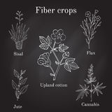 Fiber crops - cotton, sisal, flax, jute, cannabis. Hand drawn vector illustration Royalty Free Stock Photo