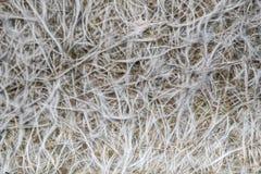 Fiber glass or fiberglass filaments foil, abstract texture Stock Photos
