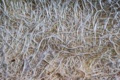 Fiber glass or fiberglass filaments foil, abstract texture Royalty Free Stock Photos