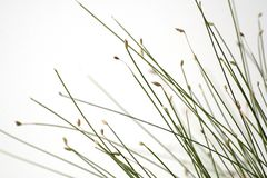 Fiber optic grass. In white background Stock Images