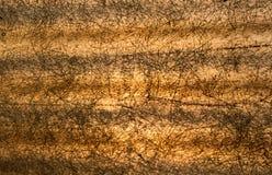 Fiberglas-Dachbeschaffenheit Stockbild