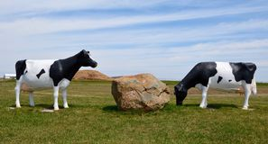 Fiberglass Cows Grazing Royalty Free Stock Images