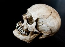 Fiberglass human skull  5. Fiberglass human skull facing to side with a black background Royalty Free Stock Photos