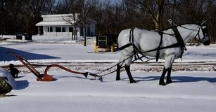 Fiberglass Percheron Draft Horse. This is a Winter picture of a fiberglass Percheron Draft Horse hitched to an antique plow on display at the Kline Creek Farm Royalty Free Stock Images