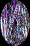 Fibers from cottonwood seed pod in digitally altered, abstract m. Bright, vibrant, abstract micrograph of lavender and white, thick fibers from cottonwood seed Royalty Free Stock Photos