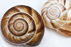 Fibonacci's spiral Royalty Free Stock Photography