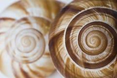 Fibonaccis spiral Arkivfoton