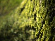 Fibra da árvore Fotografia de Stock