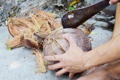 Fibra de coco do coco da casca da vista lateral Fotos de Stock Royalty Free