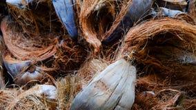 Fibra di cocco dello strappo su terra Fotografie Stock