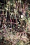 Fibras de la vaina de la semilla del cottonwood en m digital alterado, abstracto fotos de archivo