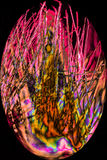 Fibras de la vaina de la semilla del cottonwood en m digital alterado, abstracto imagenes de archivo