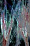 Fibras de la vaina de la semilla del cottonwood en m digital alterado, abstracto imagen de archivo libre de regalías