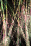 Fibras de la vaina de la semilla del cottonwood en m digital alterado, abstracto fotografía de archivo libre de regalías