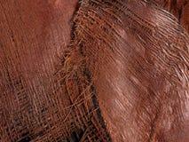 Fibras de planta naturais do detalhe Imagens de Stock
