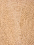 Fibre de bois Images libres de droits