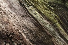 Fibre de bois 2019 III photo stock