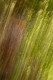 Fibre di rafia Fotografia Stock