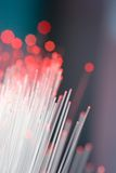 Fibres optiques photographie stock libre de droits