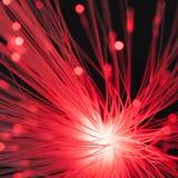 Fibres optiques Photo libre de droits