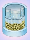 Fibroso Estructura del cartilago Стоковая Фотография