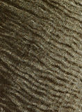 Fibrous texture Stock Photo