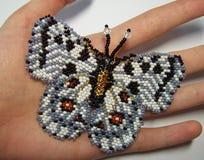 Fibula Apollo della farfalla Fotografia Stock