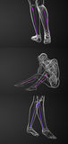 Fibula bone. 3d rendering medical illustration of the fibula bone Stock Photo
