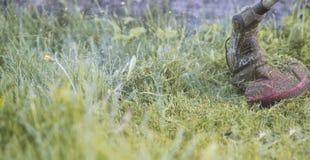 Ficelez le trimmer fauchant l'herbe, particules d'herbe volant autour photos libres de droits