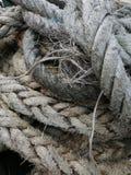 Ficelle de corde images libres de droits