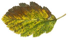 Fichero de las hojas de otoño XXL Fotografía de archivo libre de regalías
