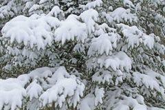 Fichte abgedeckt mit Schnee stockfotos