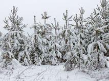 Fichte im Schnee Lizenzfreie Stockfotografie
