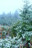 Fichten bedeckt mit Schnee Es schneit im Winterwald lizenzfreie stockfotos