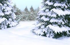 Fichten bedeckt mit Schnee Schöner Baum der schönen Winterwaldmärchen lizenzfreies stockbild