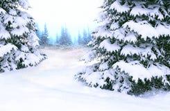 Fichten bedeckt mit Schnee Schöner Winterwaldglücklicher Weihnachtsabend lizenzfreies stockfoto
