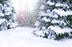 Fichten bedeckt mit Schnee Schöner Winterwaldglücklicher Weihnachtsabend stockfotos