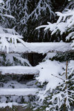 Fichten im Schnee lizenzfreie stockfotografie