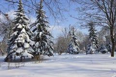 Fichten im Schnee auf den Stadtränden der Stadt im eisigen w lizenzfreies stockbild
