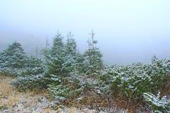 Fichten und Büsche des Wacholderbusches bedeckt mit Schnee Wilder Wald bedeckt durch Schnee lizenzfreie stockbilder