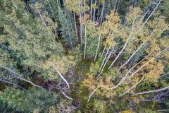 Fichten- und Espenbäume von oben stockfoto