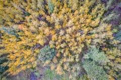 Fichten- und Espenbäume von oben lizenzfreies stockfoto